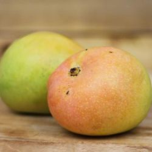 Kensington Pride Mango - Small