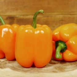 Dutch Orange Capsicum