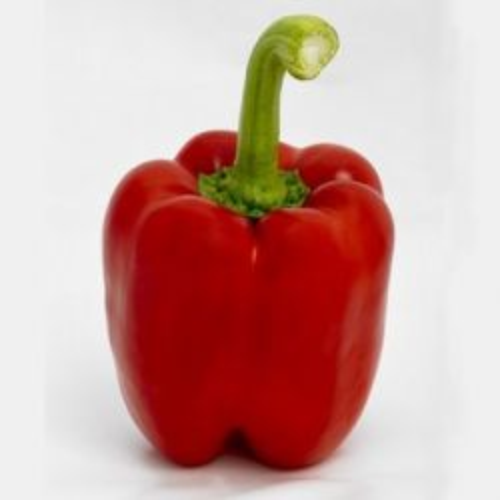 Dutch Red Capsicum