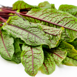Red Vein Sorrel Loose